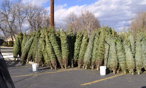 KC Christmas Tree Sales